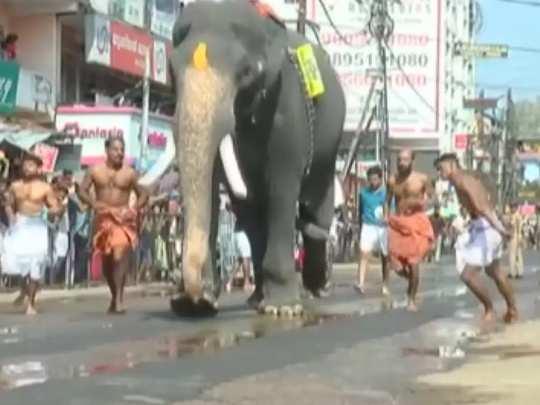 Guruvayur Elephant Race