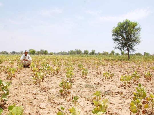 ... तरीही पुणे जिल्ह्यातील हे शेतकरी कर्जमुक्तीपासून राहिले वंचित (संग्रहित छायाचित्र)