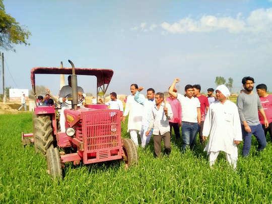 किसान ने उजाड़ दी 12 बीघा फसल