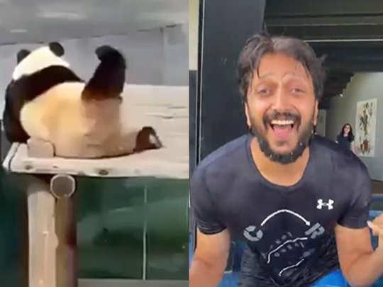 Riteish Deshmukh shares funny video of panda