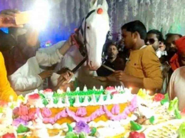 horse-birthday