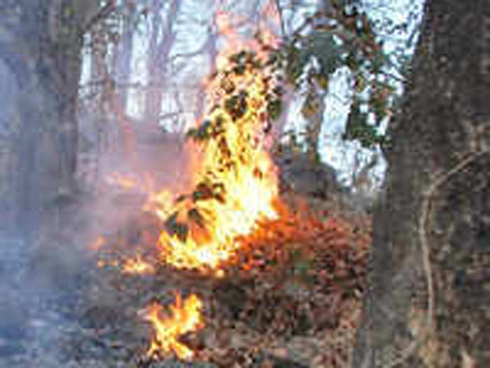 Nagzira Fire