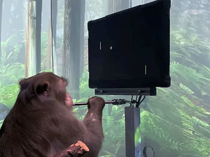 Elon Musk Monkey