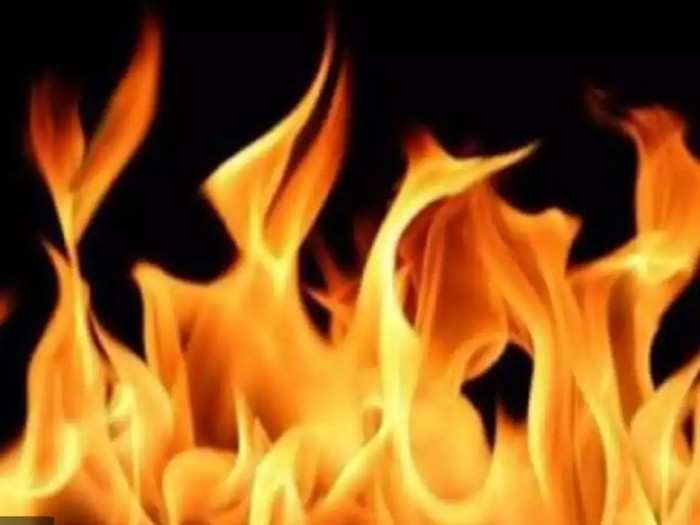 धक्कादायक! भटक्या कुत्र्याला जाळून मारले, गुन्हा दाखल