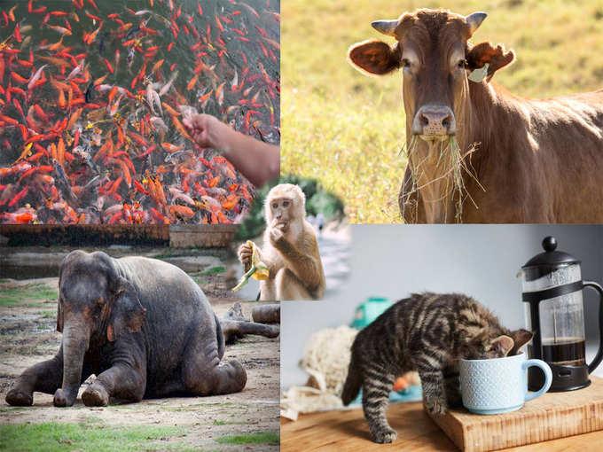 कुत्रा, गाय, मासे यांना अन्न पाणी देण्या मागे असेही लाभ