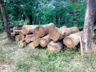 madhya pradesh forest ranger imposed more than 1 crore fine for person who cut 2 teak trees illegally
