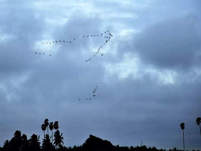 monsoon-arrival