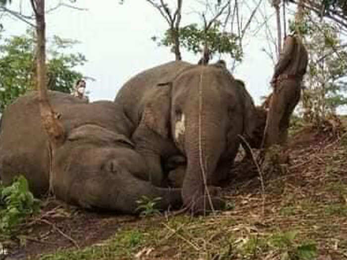 Preliminary investigation suggests the elephants could have been struck by lightning