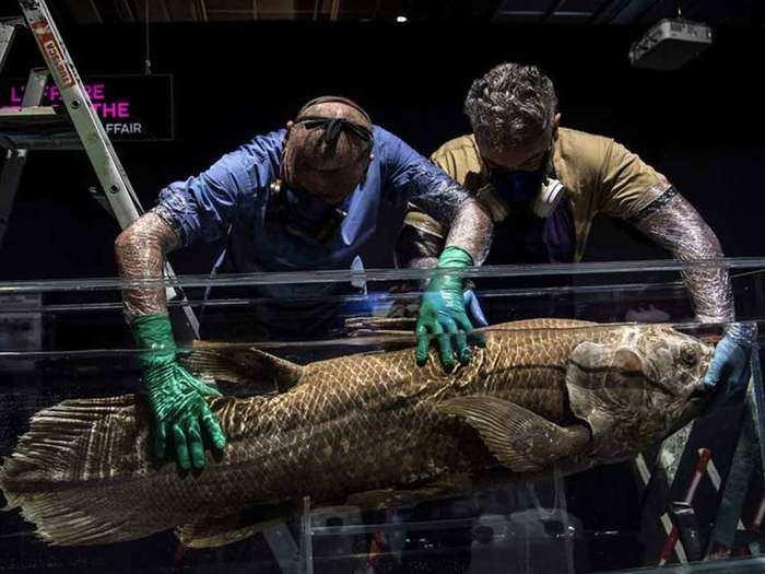 four legged fossil fish