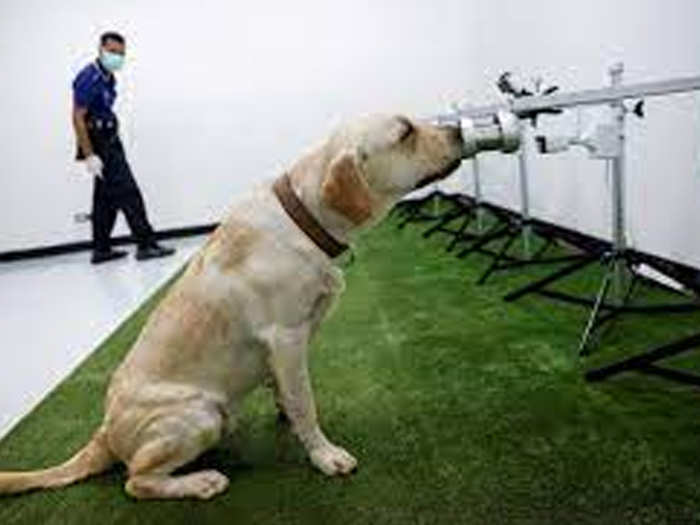 कुत्तों की ट्रेनिंग