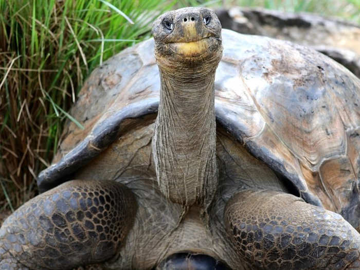 Hugo (फोटो: Australian Reptile Park)