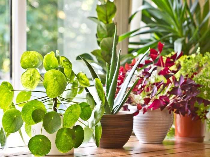 world environment day 2021 top 8 plants that provide oxygen and cleans air