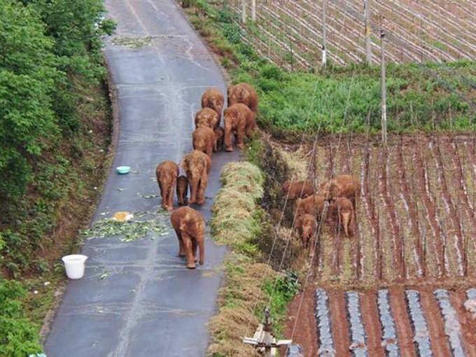 Viral elephants
