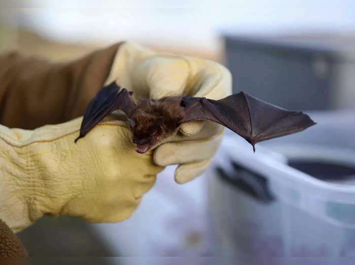 Exchange Bat Release