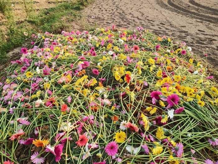 Uttarakhand News: लॉकडाउन के चलते फूल की खेती करने वाले किसानों पर मंडराया आर्थिक संकट, सरकार से राहत की उम्मीद