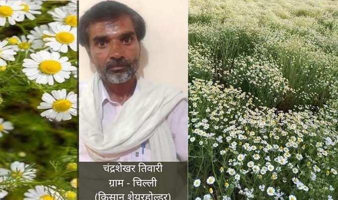 Hamirpur News: जादुई खेती से बदल रही बुंदेलखंड के किसानों की किस्मत, कमा रहे कम लागत में मोटा मुनाफा