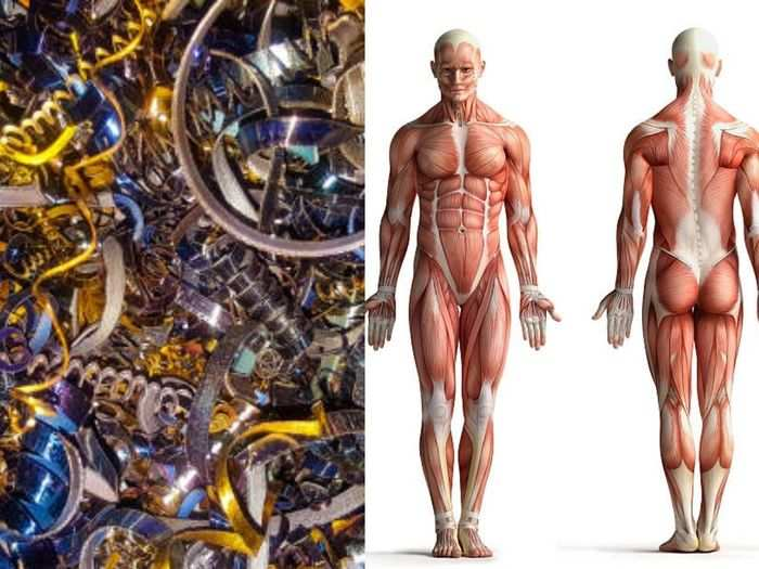 importance of metals in the human body and know which is causes of harmful or what essential for good health