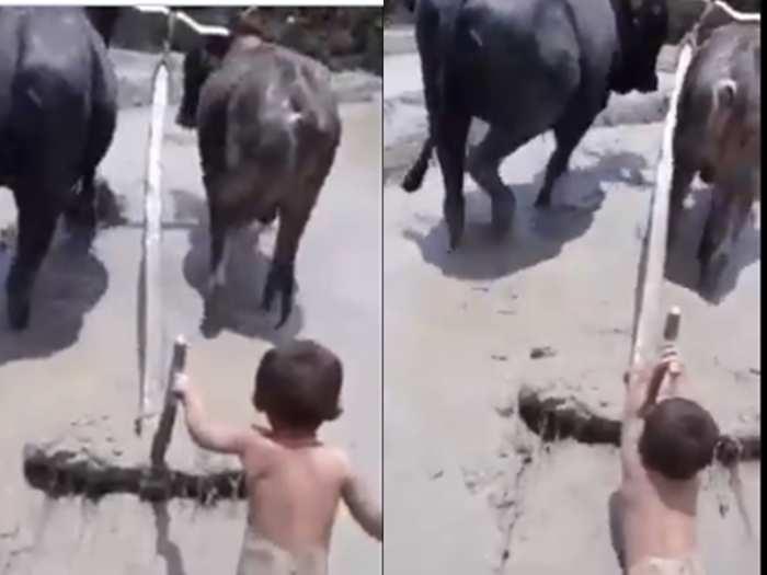 Viral Video of baby Farmer