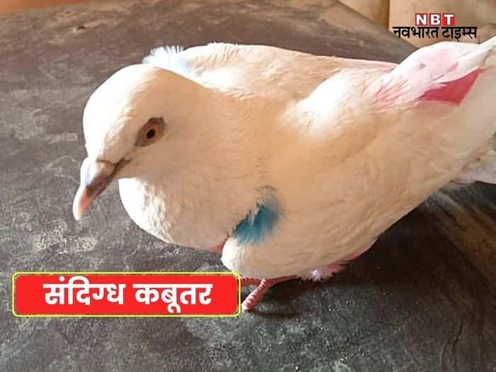 rajasthan news live update - 2021-06-14T223801.616