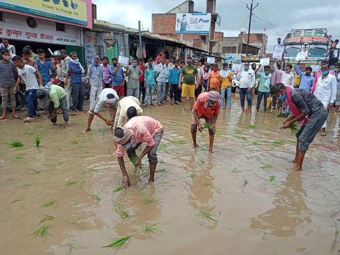 हरदोई में सड़क पर गड्ढों में रोपी धान की पौध, प्रदर्शनकारियों ने दी चेतावनी- रोड नहीं तो वोट नहीं