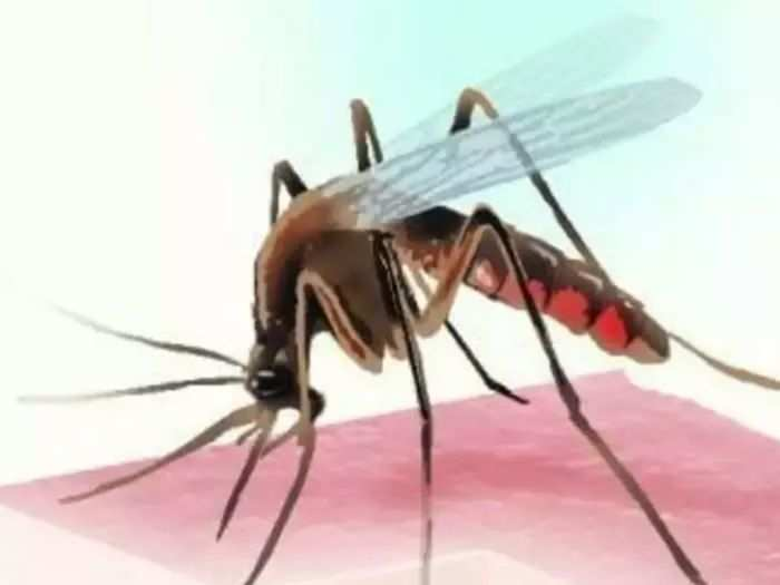 dengue fever cases fell by 77 per cent by miraculous bacteria and scientists finds success by groundbreaking trials
