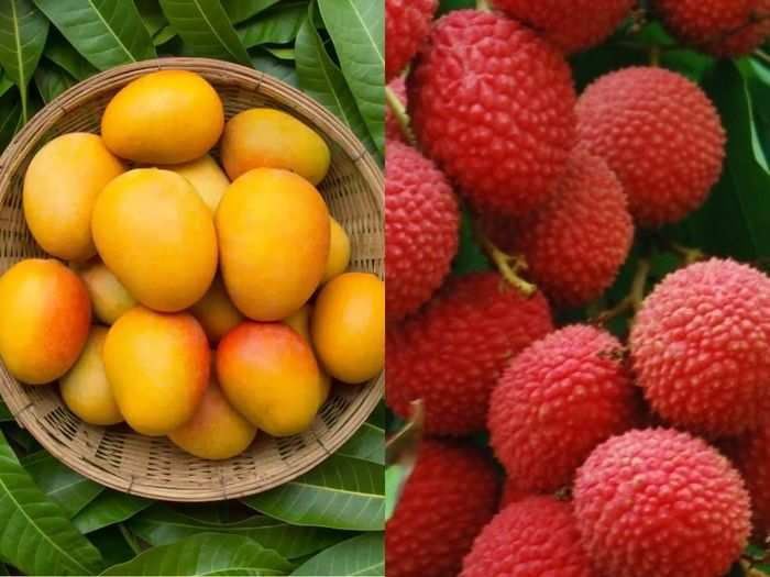 diet tips mango and litchi are healthy and nutritious in many ways and know which is best summer fruit