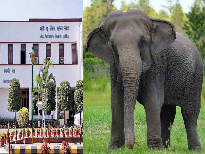हाथियों में कोरोना संक्रमण की आशंका