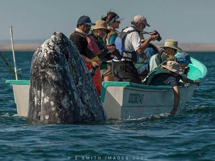 whale 011