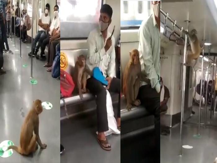 बंदर ने दिखाए कई करतब