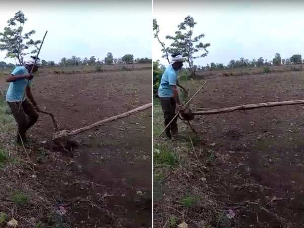 farmer in adilabad thinks different to plow his farm which attracts locals in the village