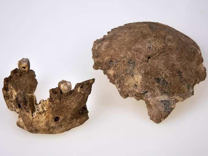 Israel Neanderthals (3).