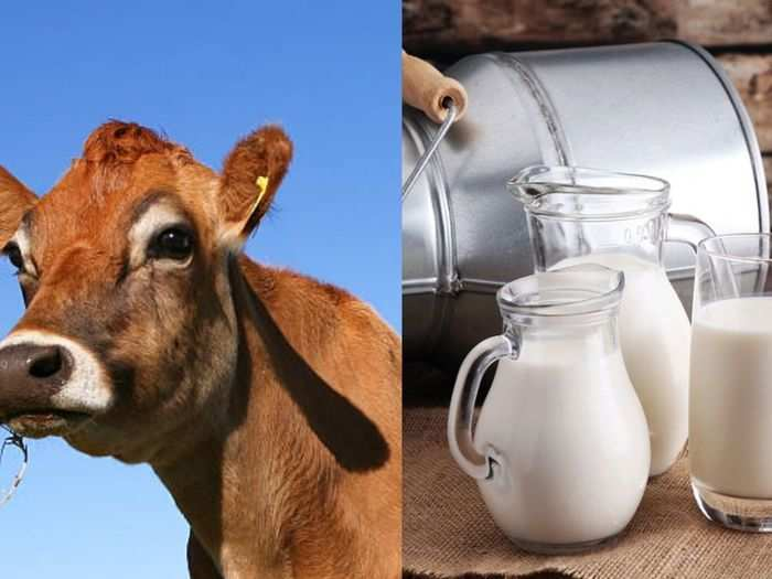 a1 or a2 milk which is good for health and which milk is best for diabetics or heart patient