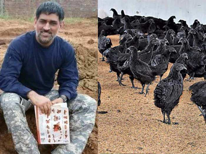 business idea: how to start a poultry farm of kadaknath breed for handsome earning