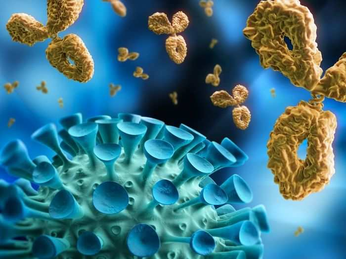 study reveals that covid19 antibodies persist at least nine months after infection