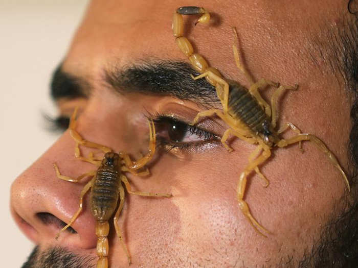 how dangerous is scorpion bite and how toxic is its venom