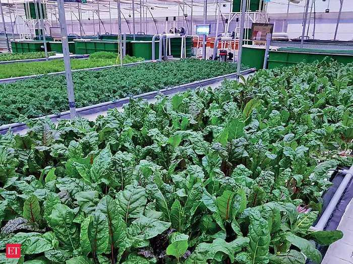 high cost foreign vegetables: farming of 4 foreign vegetables which can be sold up to rs 600 per kg