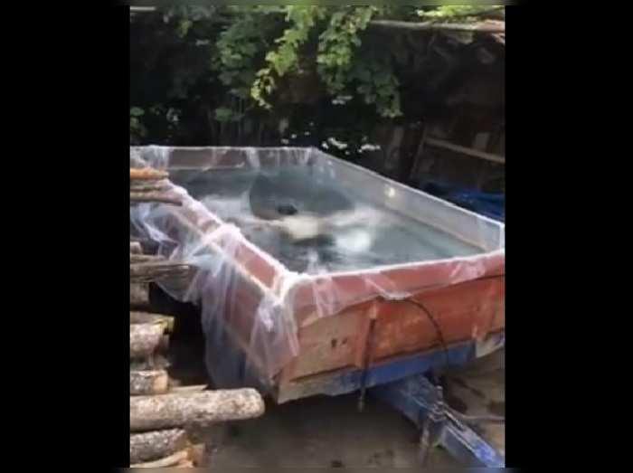 Jugaad Swimming Pool