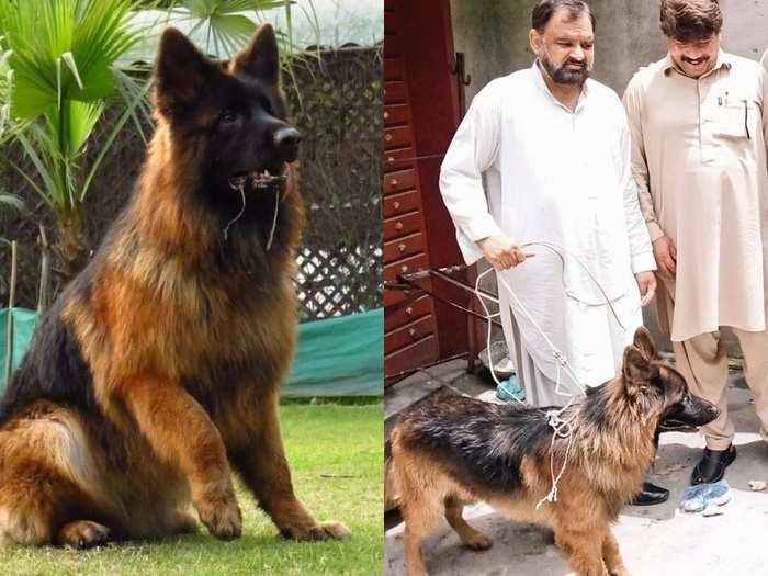Pakistan Dog Final 011