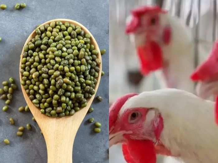 nutrition comparison mung bean vs chicken protein and know which food is good for health