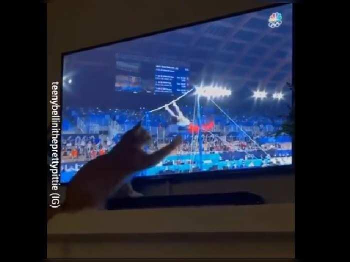 Cat Watching Gymnastics