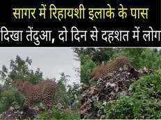 leopard seen near residential area in sagar people in panic