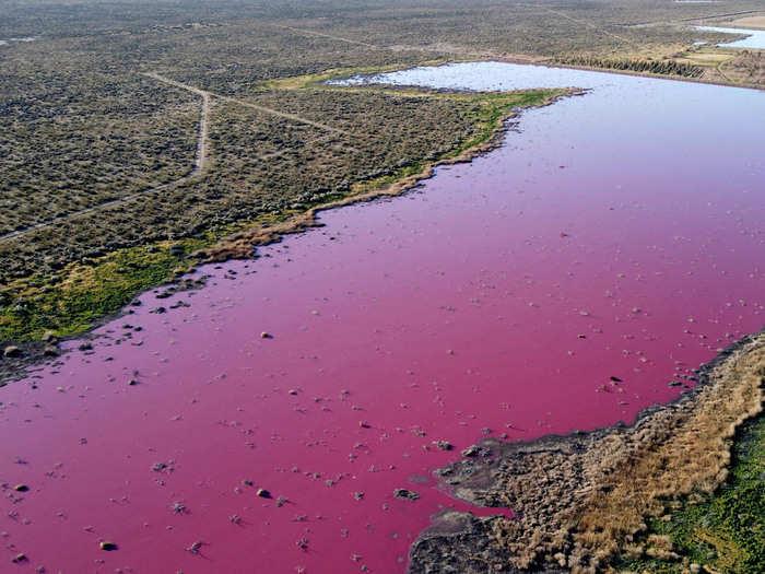 Pink Lake AFP