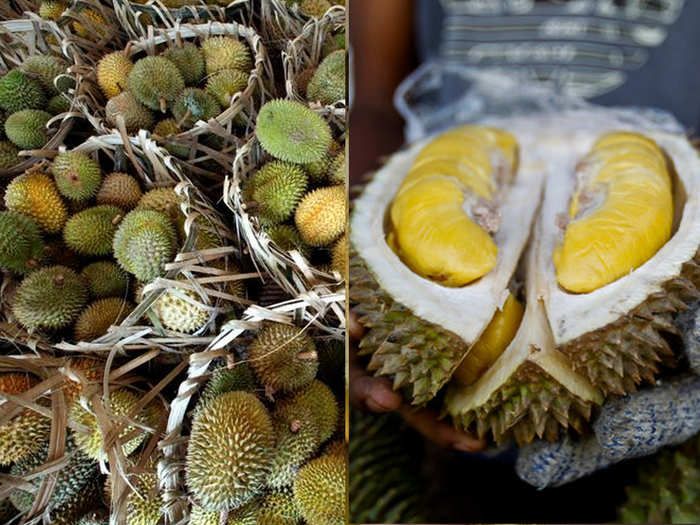 durian musang king called gold on trees in malaysia caught in controversy between farmers and government
