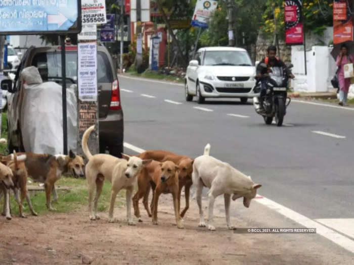 nearly 300 stray dogs killed with poisonous injections in west godavari of andhra pradesh