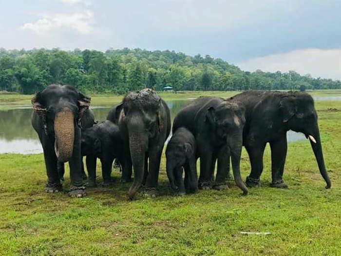 Gadchiroli Kamlapur Elephant Camp