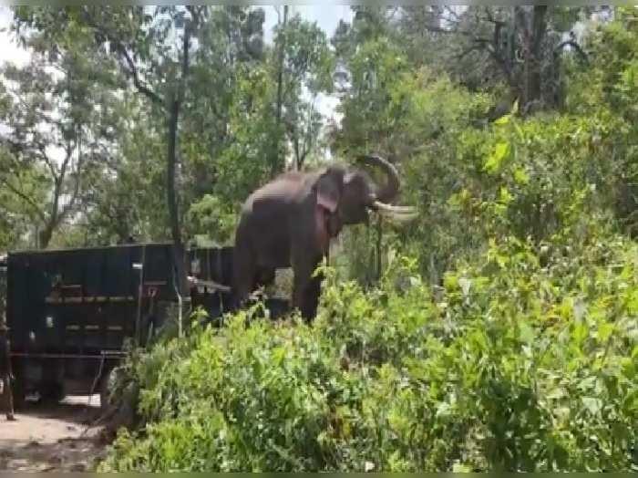 Elephant Rivaldo