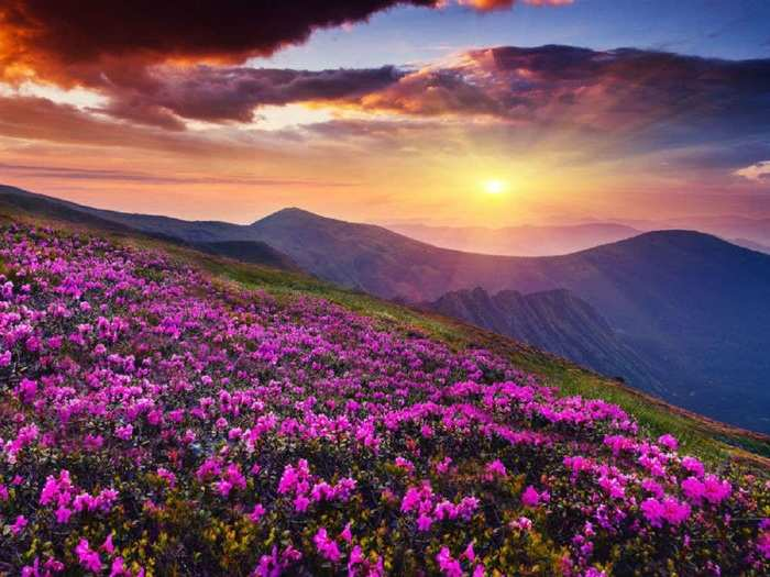 how to reach valley of flowers in hindi