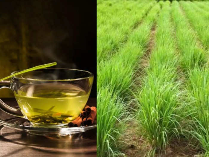 lemongrass good for kidney patients and know its other health benefits and side effects