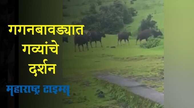 Kolhapur News| Whatsapp Group Link