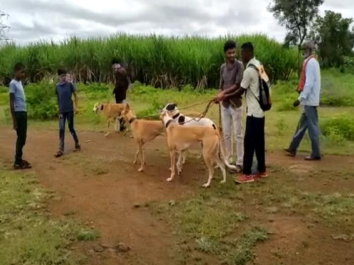 sangli dog competition